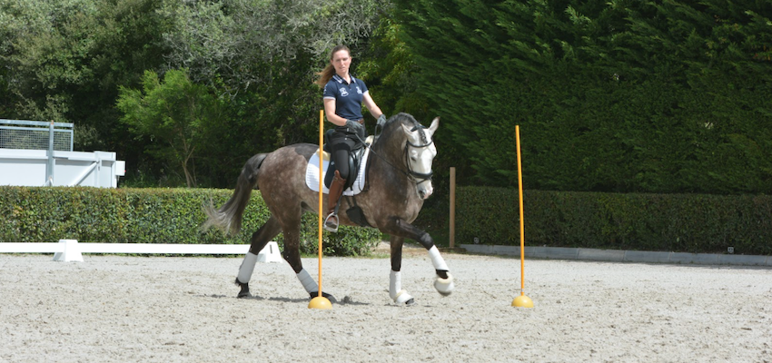 horse-canter-working-equitation