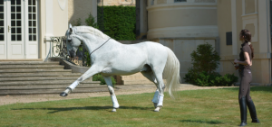 horse-training-liberty
