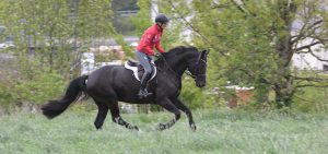 interval-training-horses