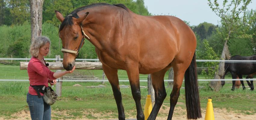 liberty-training-clicker-horse