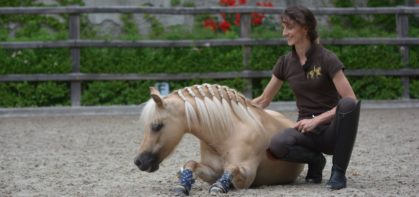 liberty-training-horse-tricks