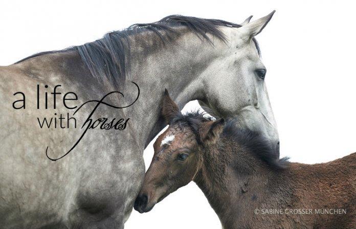 Pferde-mit-verschiedenen-Fellfarben