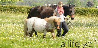 Pferde-führen
