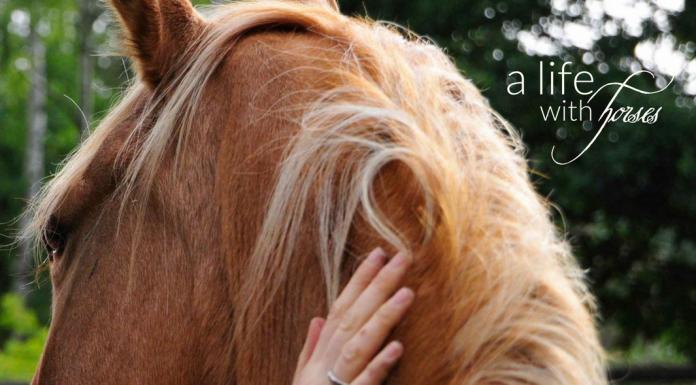 loben-Pferde
