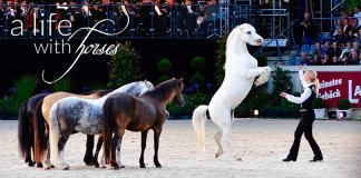 pony-freiheitsdressur