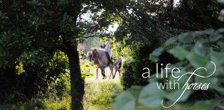 aeltere-pferde-sind-genuss