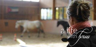pferde-online-finden