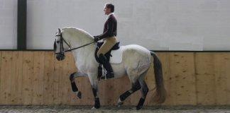 David-de-Wispelaere-reitet-Piaffe