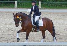 praxiserfahrung-rund-um-den-alltag-mit-pferden