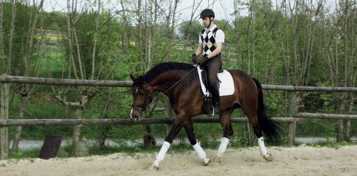 ausbildung-junger-pferde
