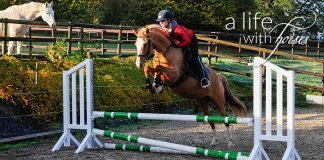 Springstunde-junges-Pferd