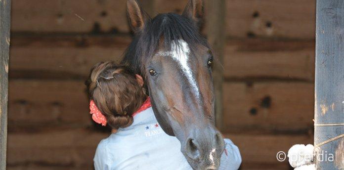 pferde-pflege