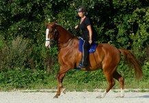 reiten-bewegt-das-pferd