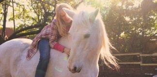 HippoSophia - die Weisheit der Pferde