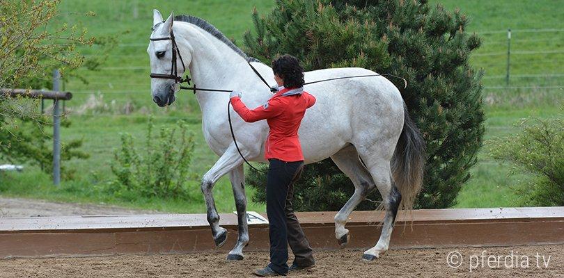 handarbeit-pferd