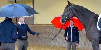 Pferde-mit-Regenschirm