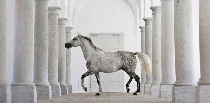 Pferderassen-im-Portrait