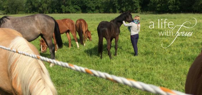 pferde-machen-glücklich