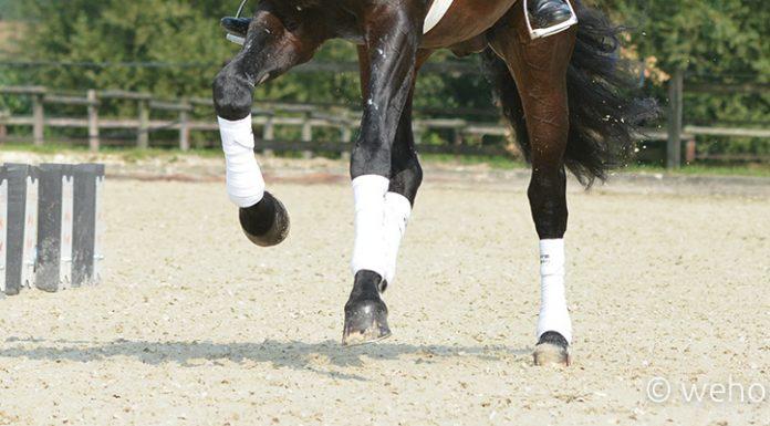 Gamaschen-Dressurgamaschen-Beinschutz