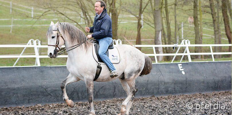 Stefan Schneider Working Equitation