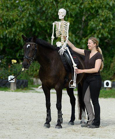 skelett-pferd-anatomie