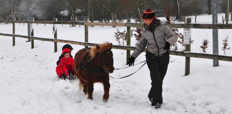Schlitten-fahren-mit-Pony