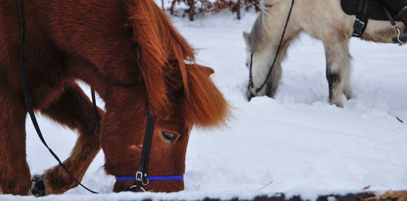 Ponys-im-Winter