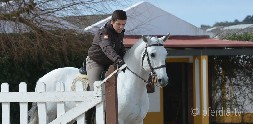 pedro-torres-working-equitation