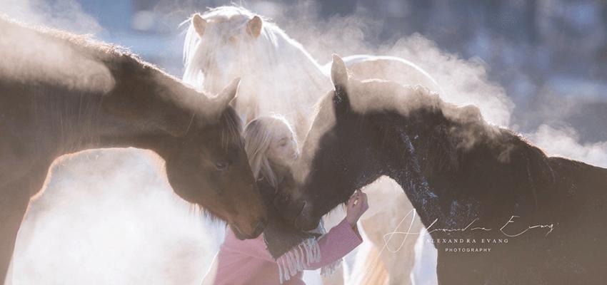 Pferde-im-Schnee