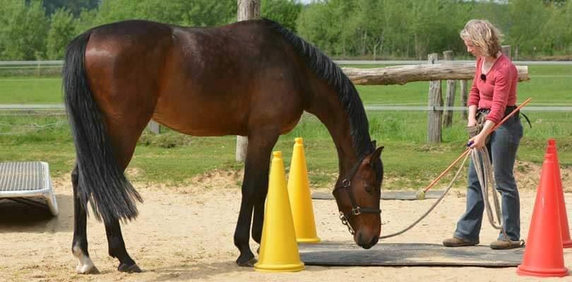 Klickern-mit-dem-Pferd