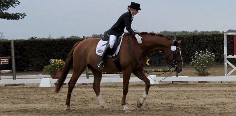 Pferd-ausgebildet-von-David-de-Wispelaere